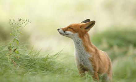 什么是野狐禅?
